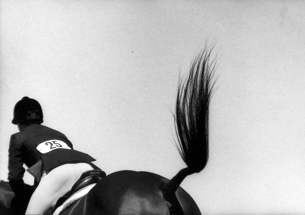 brushtail horse&jumper.jpg