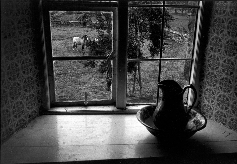 horse out window, pitcher.jpg