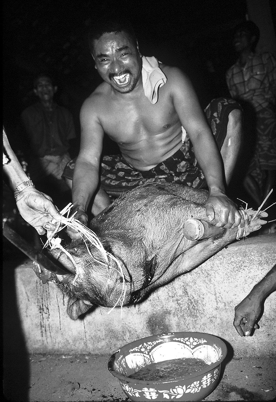 bali pig bleeding b&w.jpg