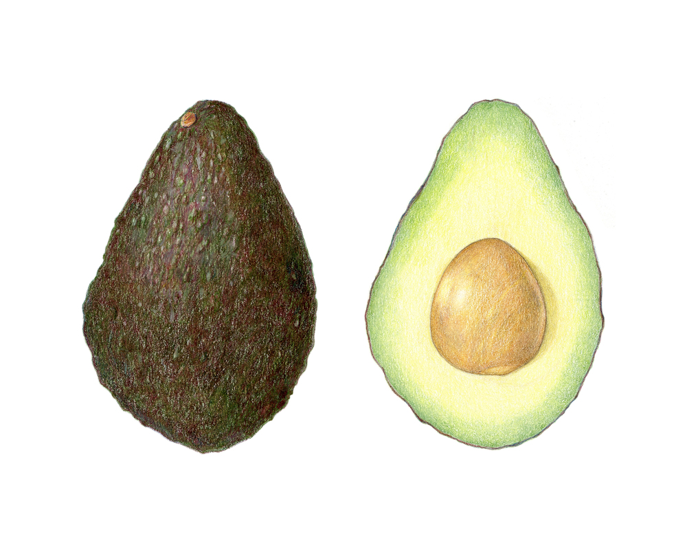 Avocado, colored pencil