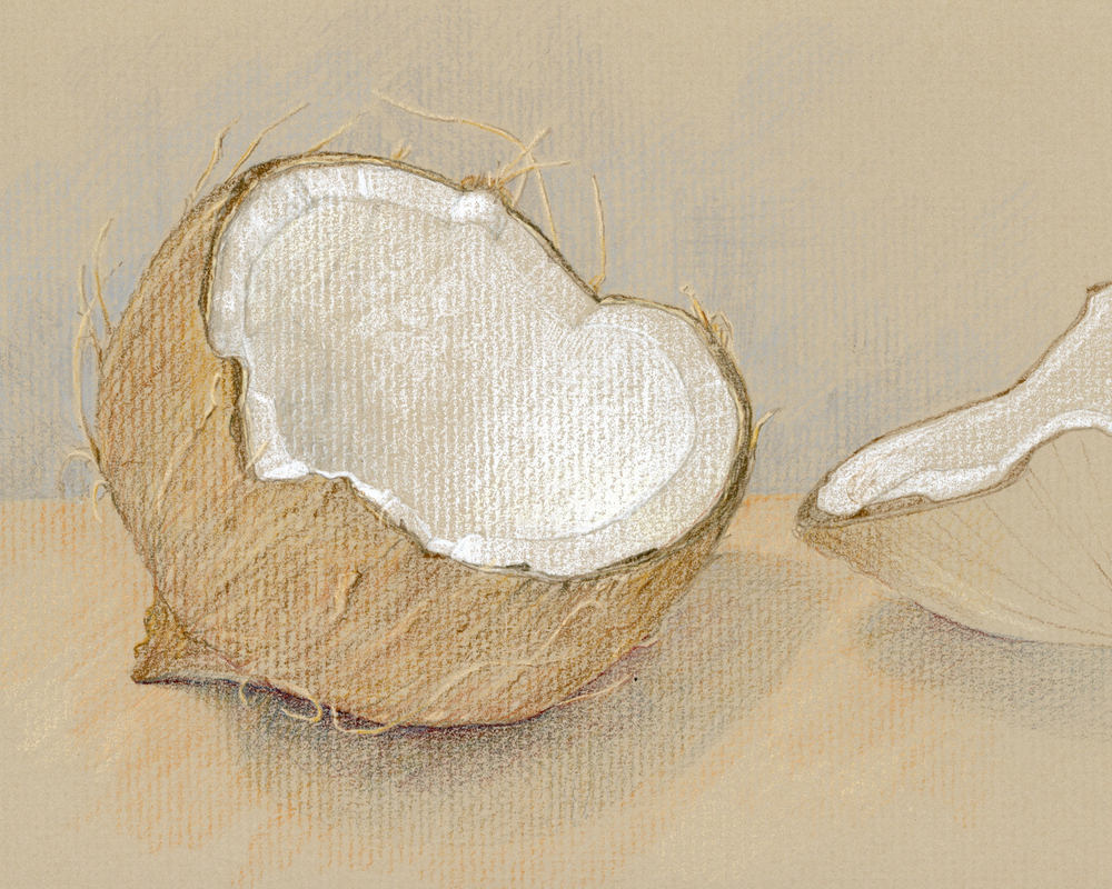 Coconut, colored pencil on toned paper