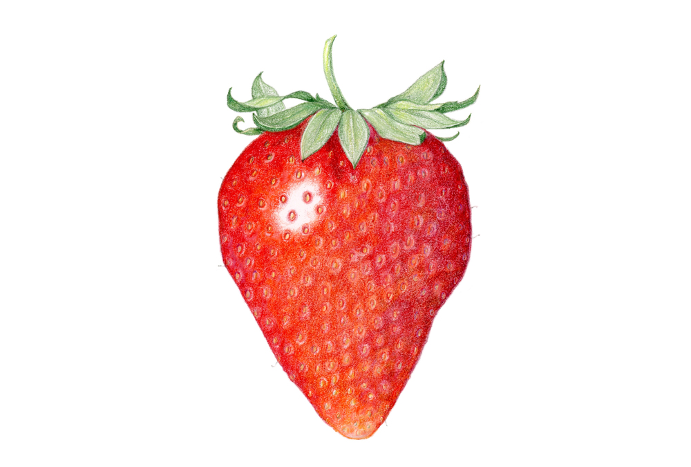 Strawberry, colored pencil