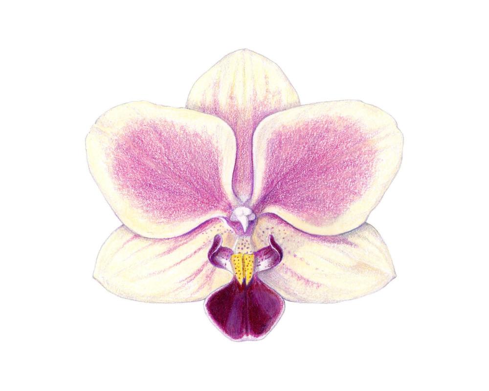 orchid_ss.jpg