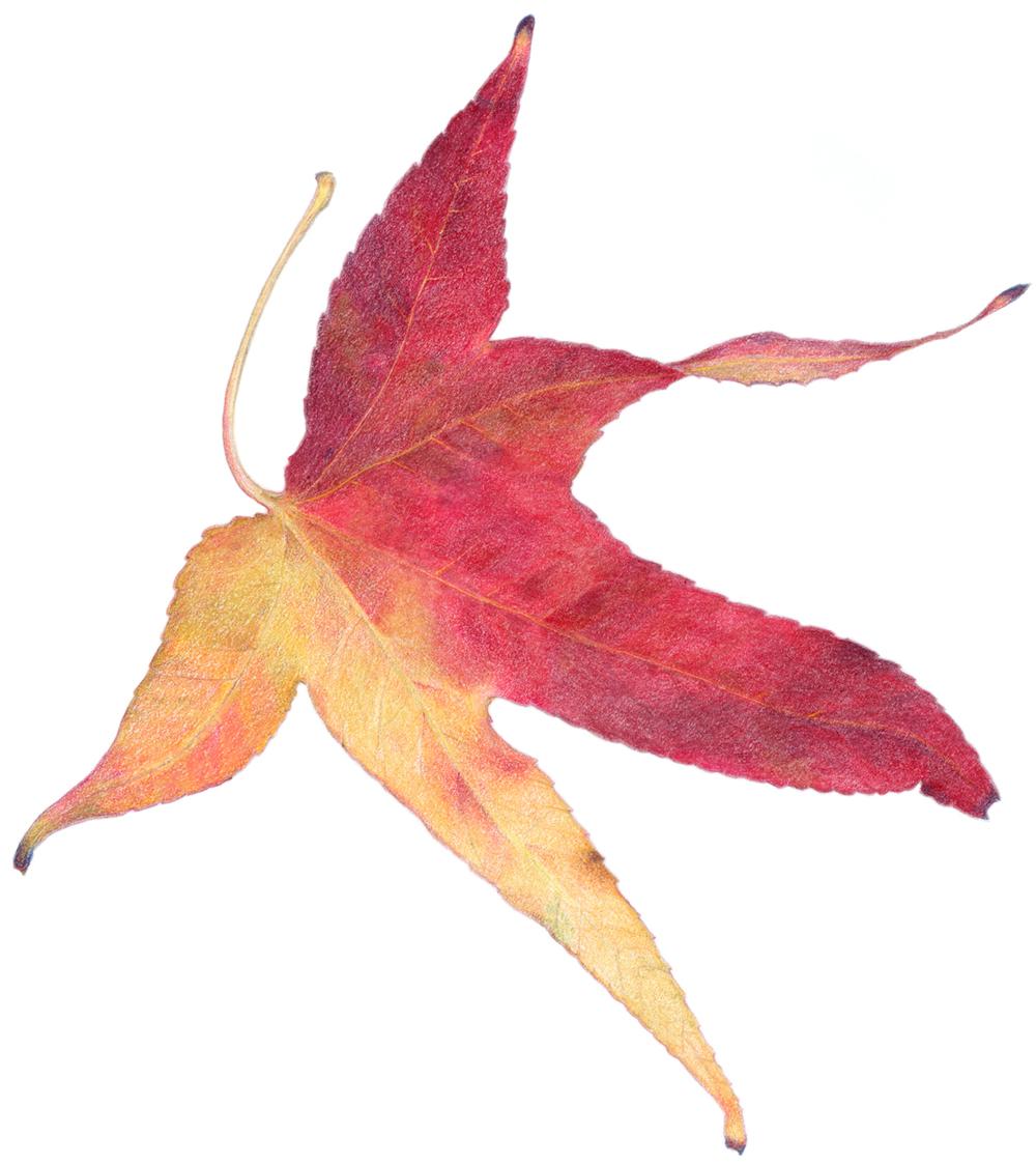 AutumnLeaf_calendar.jpg