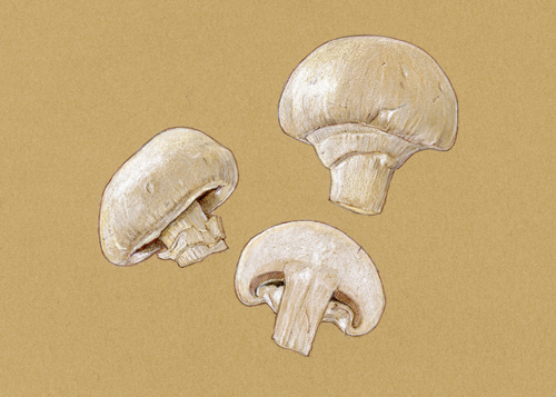 ButtonMushrooms_500.jpg