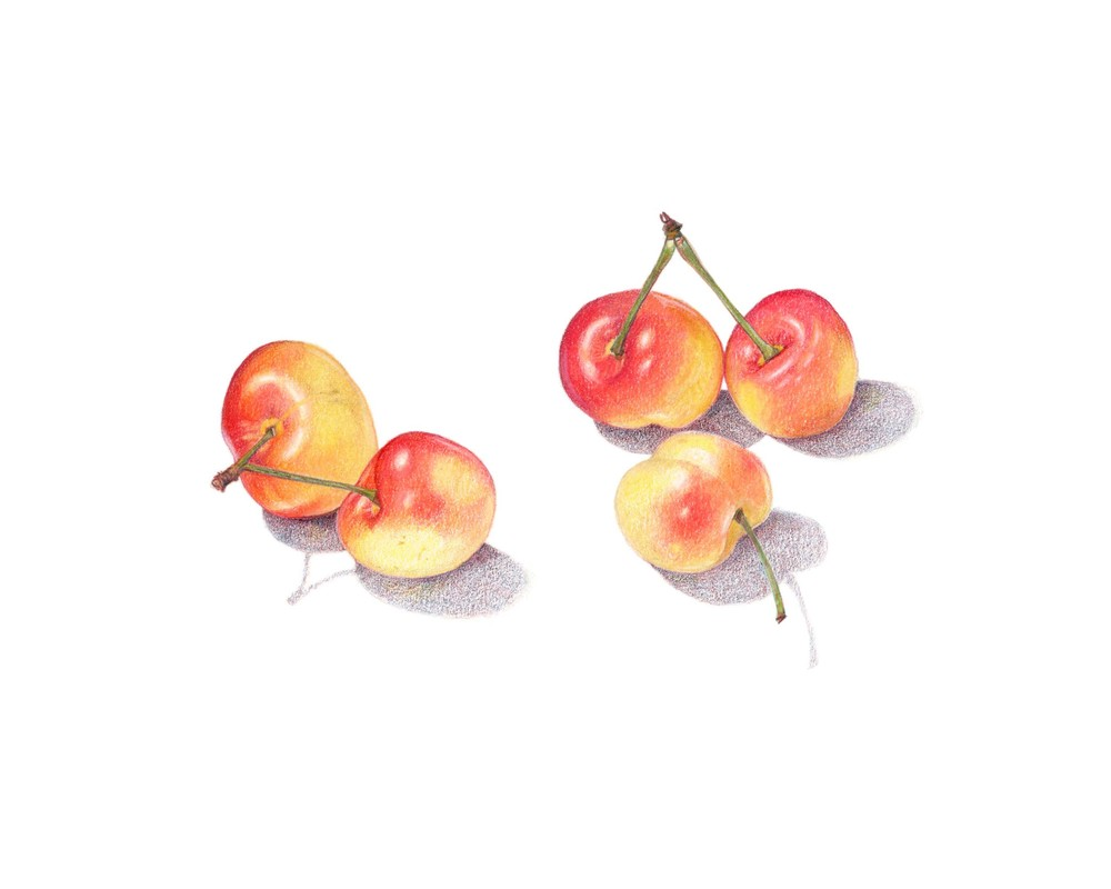 RainierCherries_final_clean.jpg