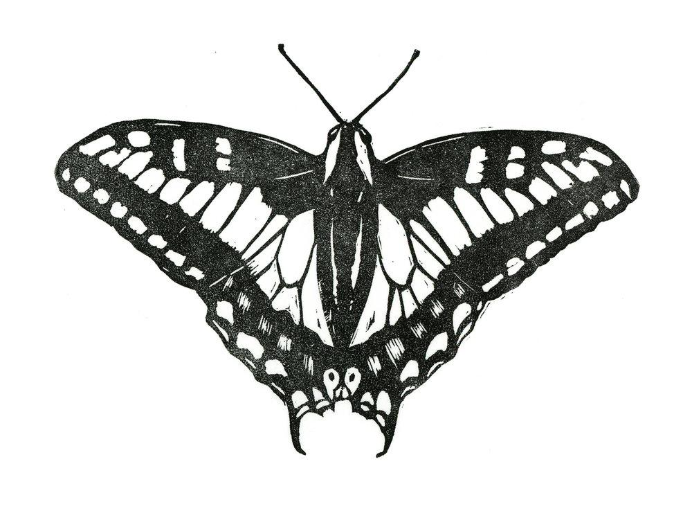 Swallowtail162.jpg