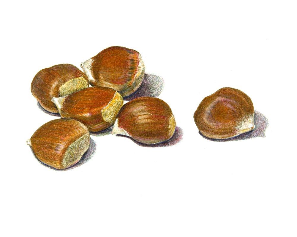 Chestnuts_ss.jpg