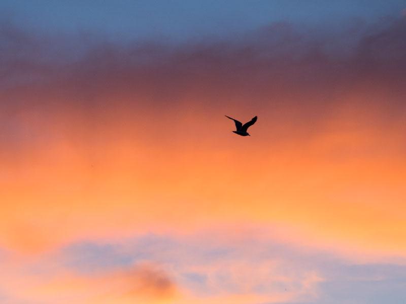 SunsetWithBird_DAY1