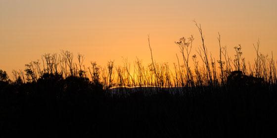D192_SunsetGrass