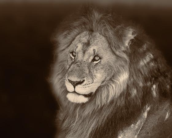 D261_LionWEB