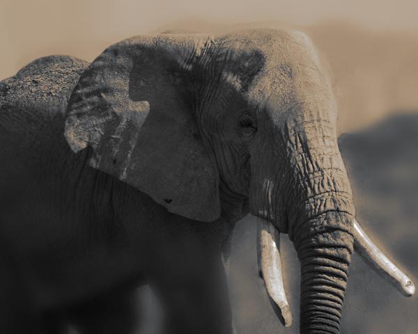 ElephantWEB