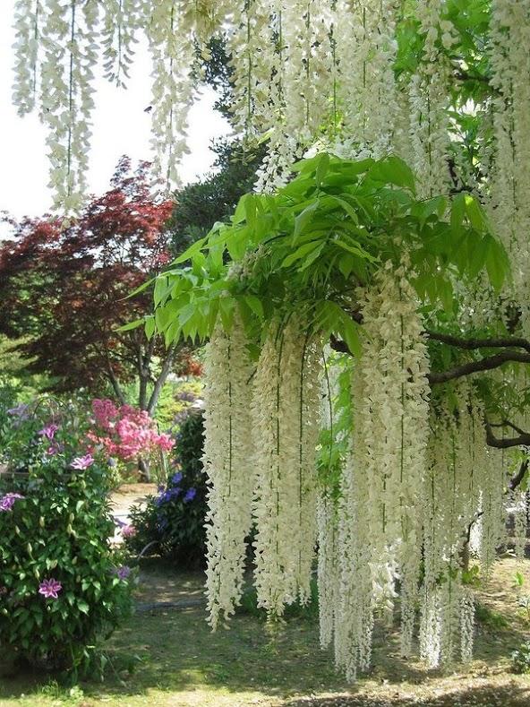 japantrees2.jpg
