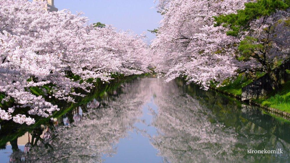 japantrees.jpg