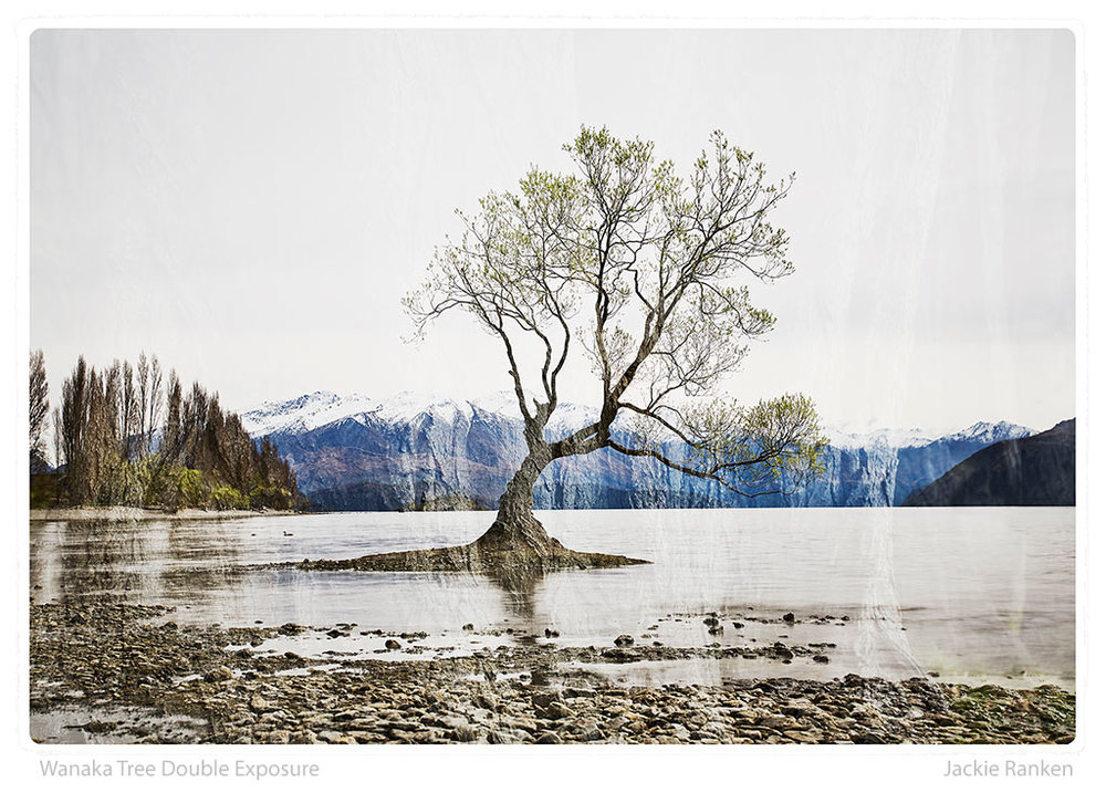 37-Wanaka-Tree-Double-Exposure-Ranken.jpg