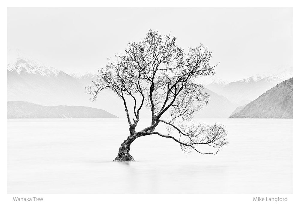 38-Wanaka-Tree-Lanford.jpg