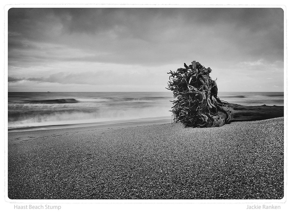 24-Haast-Beach-Stump-Ranken.jpg