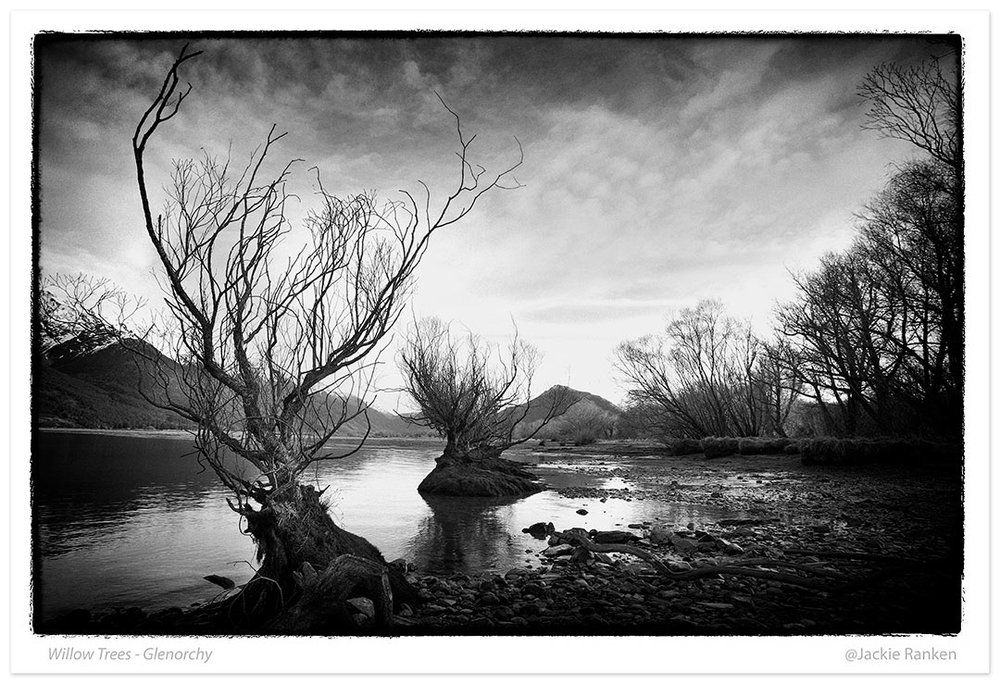 15-Glenorchy-willow-trees-print-56x80.jpg