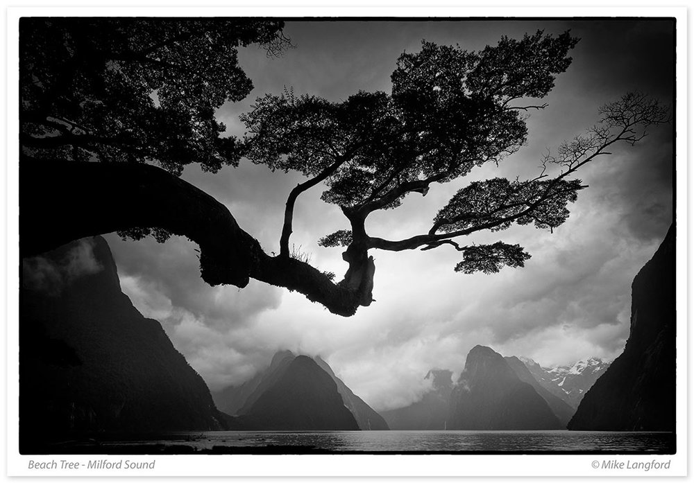 9-Beach-Tree-Milford-Sound.jpg