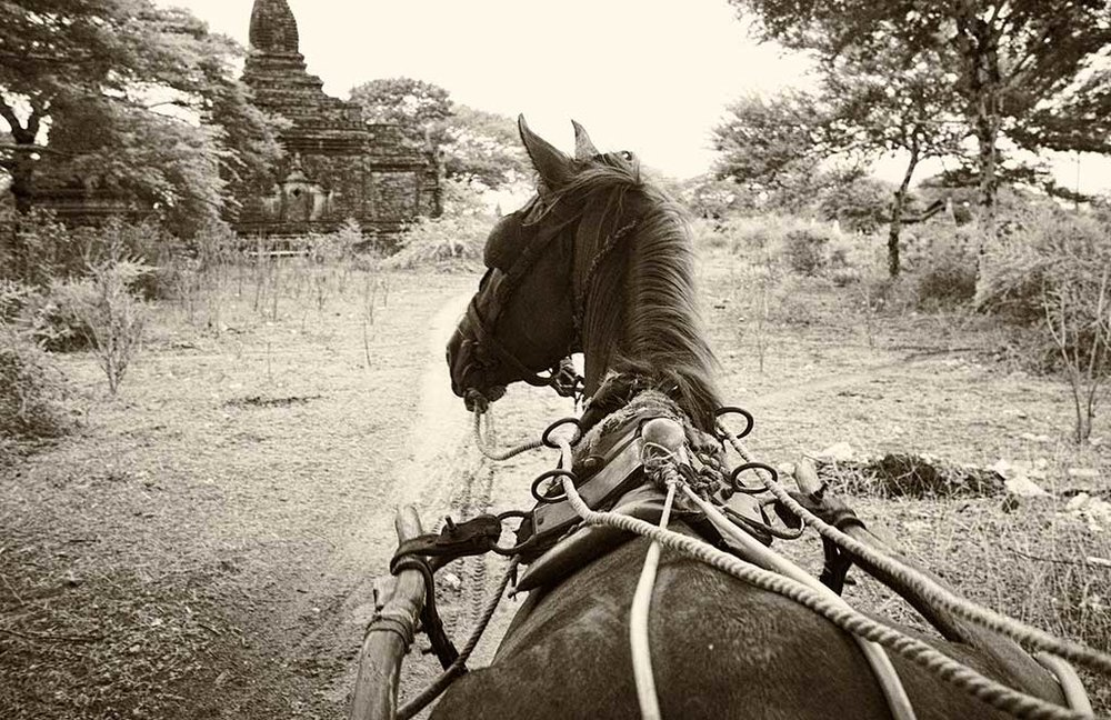 Horse-cart Taxi - The Plains of Bagan - Myanmar