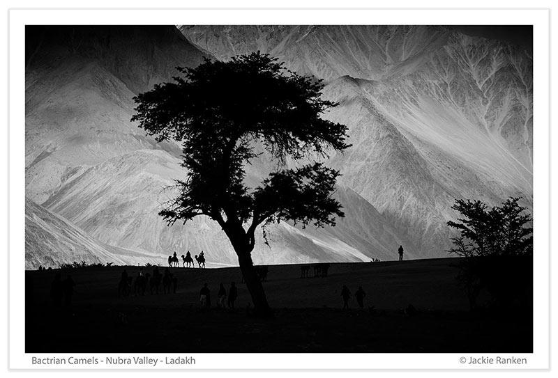 Camels-Nubra-Valley-JR012.jpg