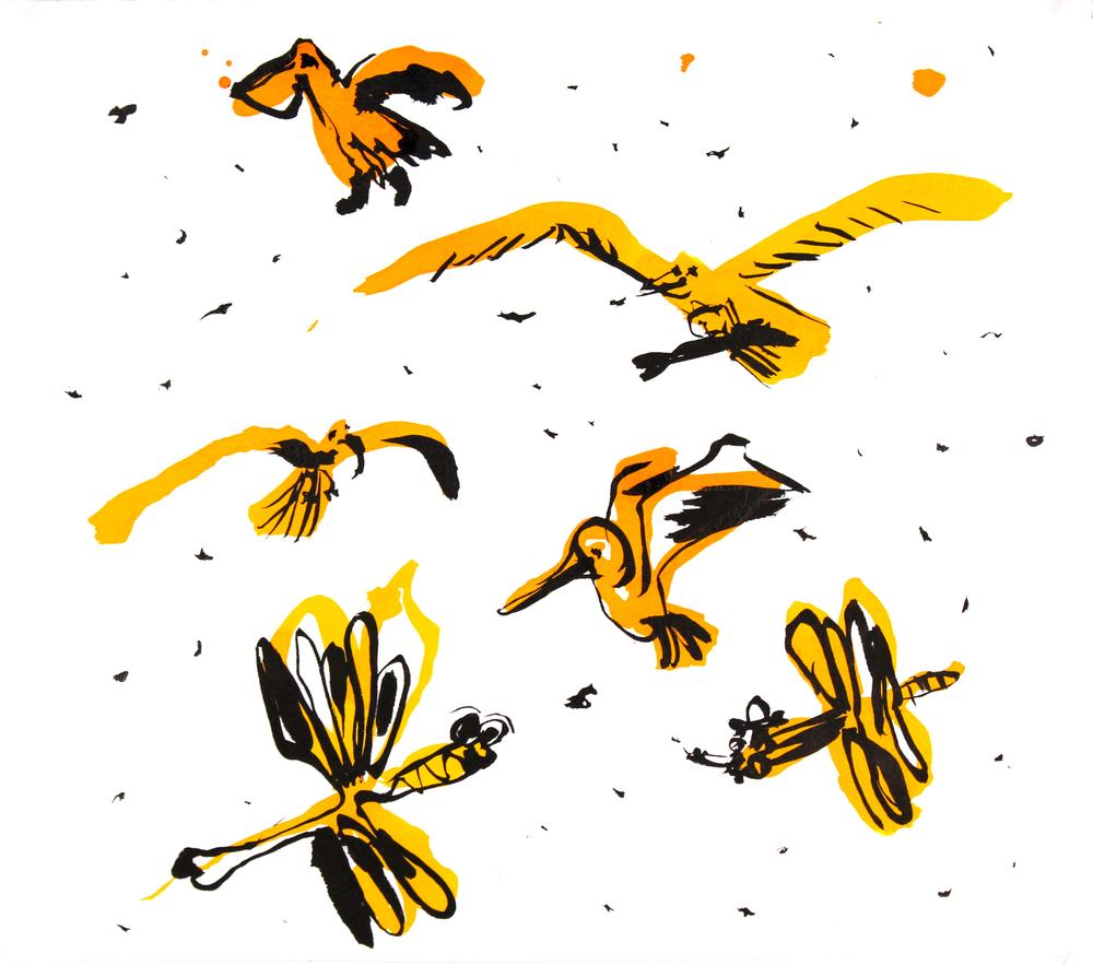 Bird Study 1, 2015