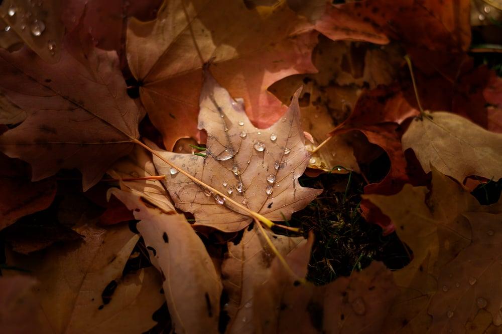 2015_Grave Leaves_IMG_51011500 wide.jpg