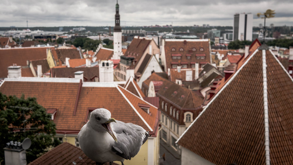 Möwe in Estonia by Ally Lee