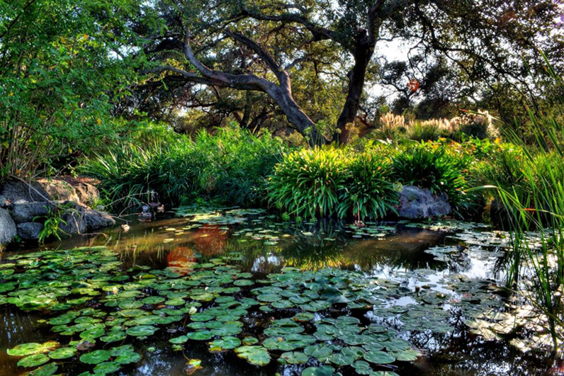 LA Arboretum Places To Go In LA Pond.jpg