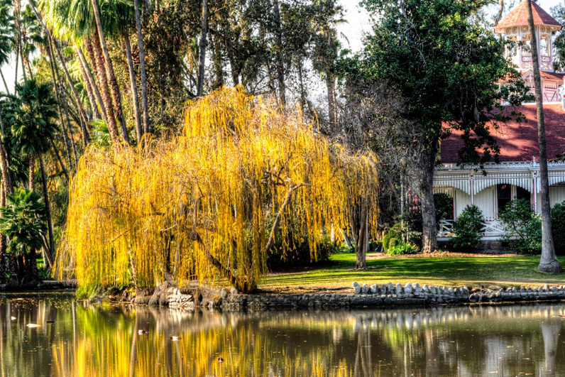 LA Arboretum Places To Go In LA Weeping Willow.jpg
