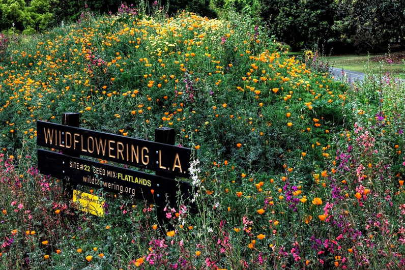 LA Arboretum Places To Go In LA Wildflowers.jpg