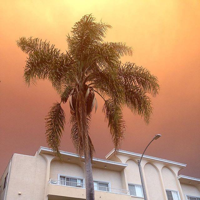 Today's LA sky