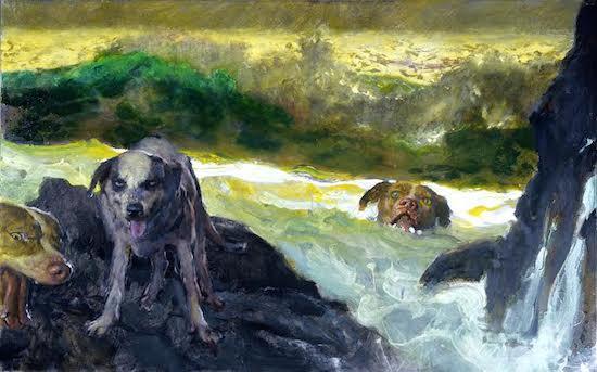 swimdogs