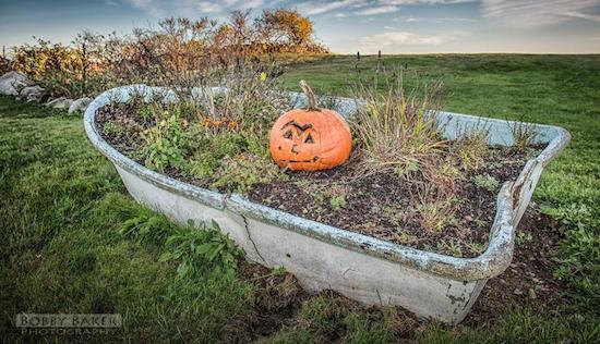 pumpkinbobbybaker