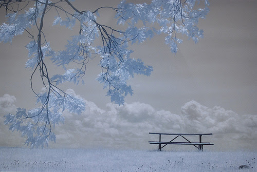 """Oak Trees and Picnic Table,'' by Sandra Shenk, at the Helen Day Art Center, Stowe, Vt., Dec. 2-31."