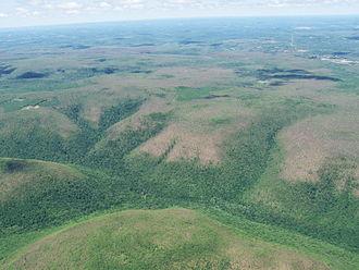 Hillsides in a gypsy-moth infestation.