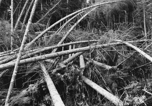 Forest damage after the 1938 Hurricane.