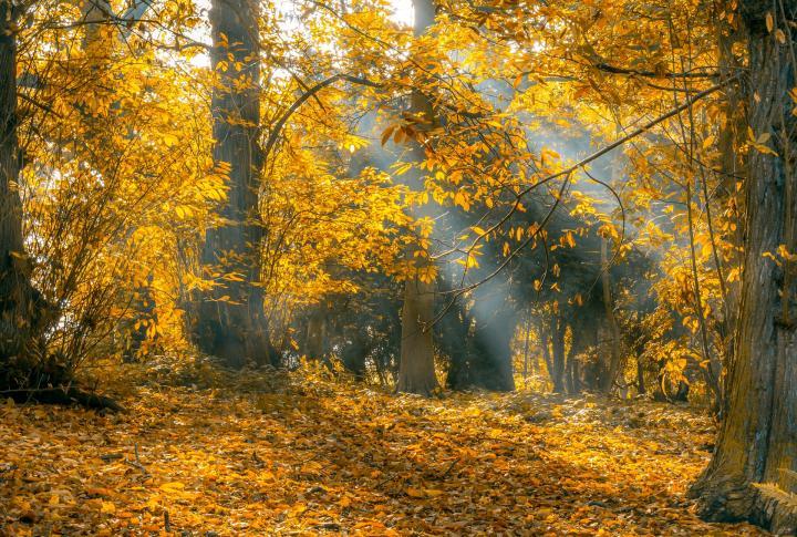 autumn-2444046_1920_full_width.jpg