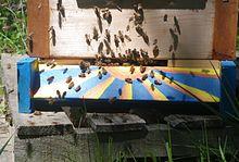 Bees_at_the_hive_entrance.JPG
