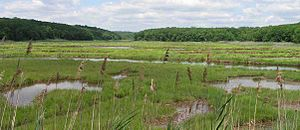 Salt marsh along Long Island Sound in Connecticut.