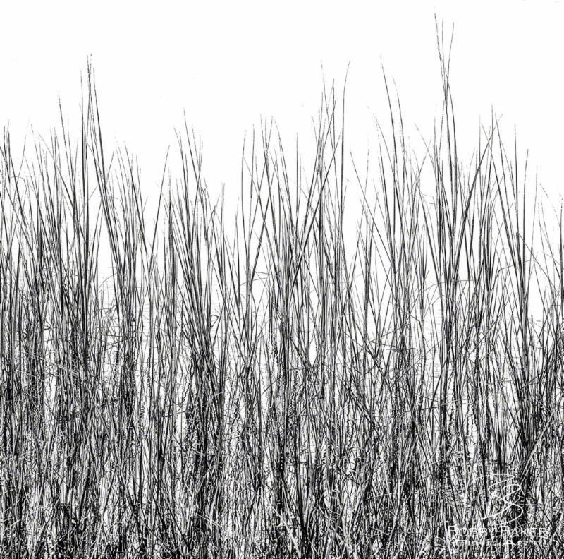 """Grass in Little Bay, Pocasset, Cape Cod'' (limited edition   aluminarte   metal print), by Bobby Baker.    -- Copyright Bobby Baker Fine Art Photography"