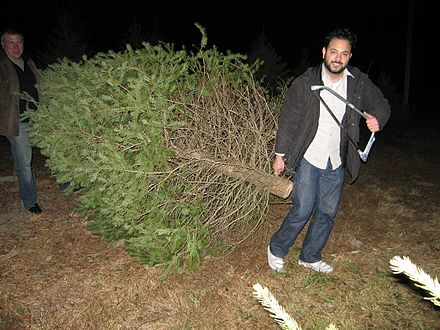 440px-Christmas_tree_farm_customer_choose_n_cut_farm2.jpg