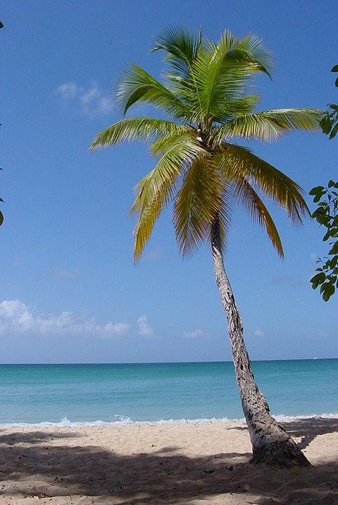 480px-1859-Martinique.web.jpg