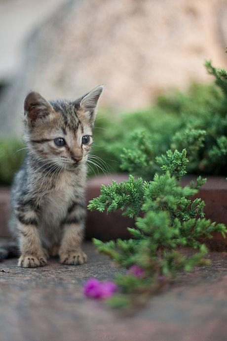 Kitten_in_Rizal_Park,_Manila.jpg