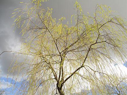 Spring_in_Stockholm_2016_(2).jpg