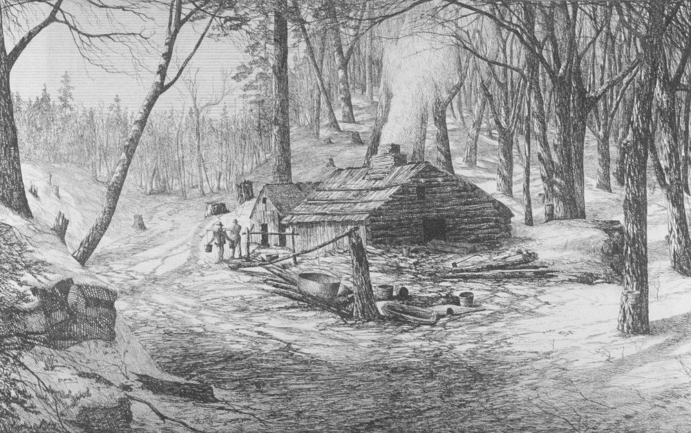 """""""Sugar shack,'' where the sap is boiled to produce syrup, surrounded by its """"sugar bush''."""