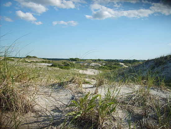 Dunes at Sandy Neck, in Barnstable, Cape Cod.