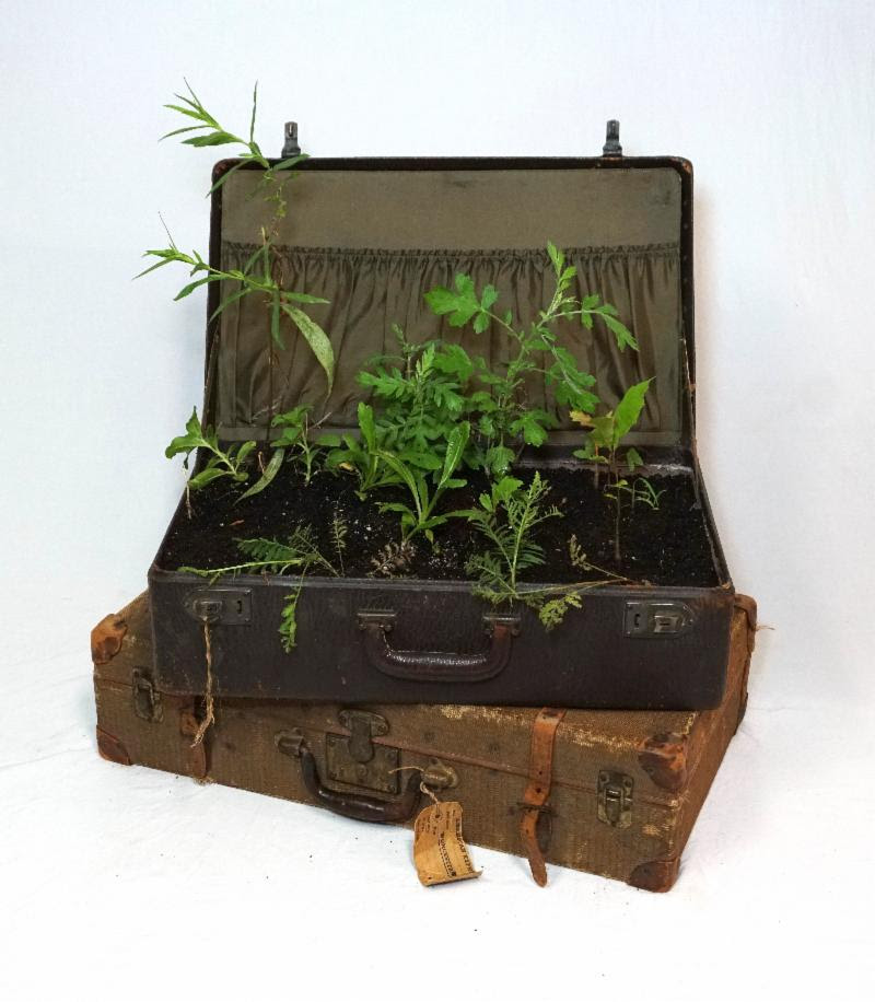 """Nomad II'' (vintage suitcases, weeds) by Wen-hao Tien, in the group show ""Close to Home,'' at Galatea Fine Art, Boston, July 5-July 20."