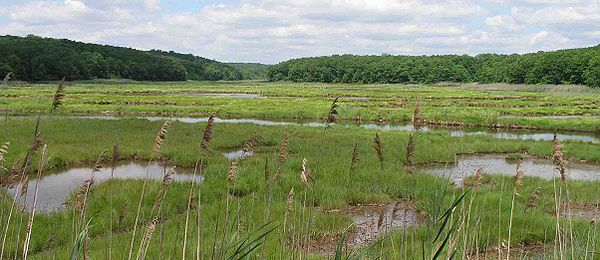 Salt marsh along the Connecticut shore of Long Island Sound.