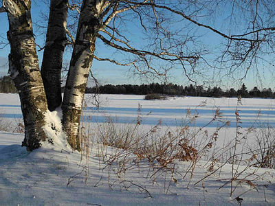 Snowscape_(6701322581).jpg